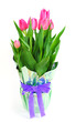 Beautiful pink tulips in a pot
