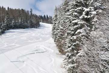tracks on ski slopes at beautiful sunny  winter day