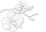 Fototapety White orchid