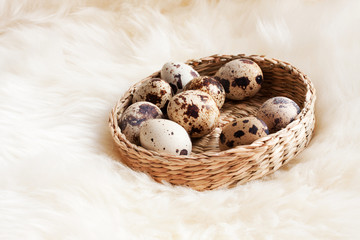 Group colored quail eggs in a beautiful basket