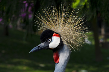 Uccello punk