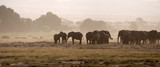 Elephants, Amboseli National Park