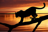 Silhouette of leopard on branch on sunset background - 31731100