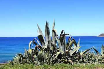 Kaktus Sardinien
