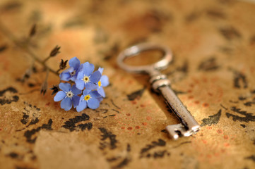 Forget-me-not on Diary