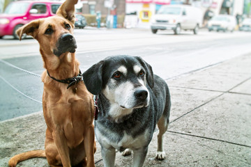 Two dogs on sidewalk