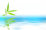 bambou reflet
