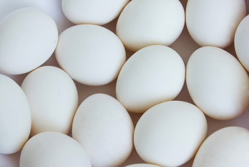 group of white eggs on a white background