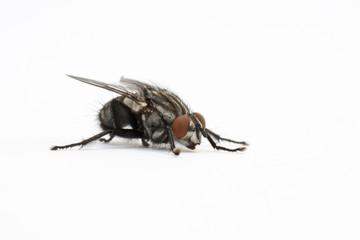 mosca aislada