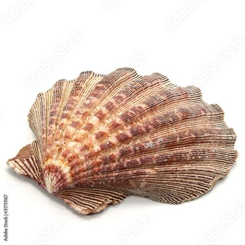 Leinwanddruck Bild Muschelschale