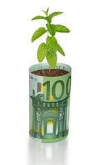 mint growing from euro bill