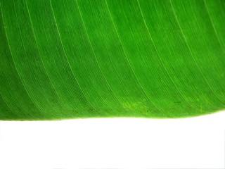 banna leaf texture1