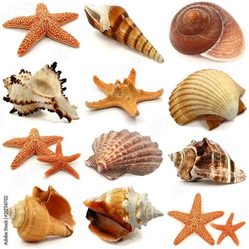 Muscheln, Schnecken und Seesterne Set
