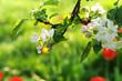 Frühling 180