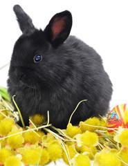 black bunny on yellow plants