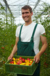Bauer mit Tomatenkiste
