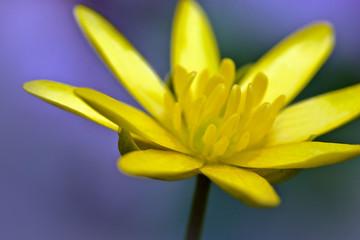 Abstract of yellow petals