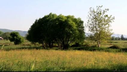 VIDEO HD 1080,einsamer Baum,Schwarzwald