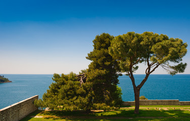 Adriatic sea shore of Rovinj, Croatian coast, with pine trees