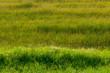 paesaggio campi 1703