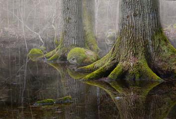 туманное болото