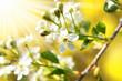 Frühling 182