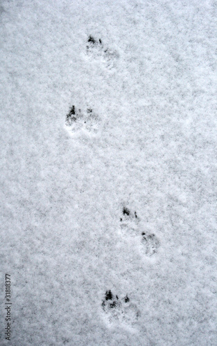 Tracks of dog on snow
