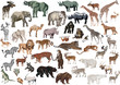 isolated color animals huge collection