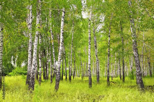 Canvas Berkbosje Birchs