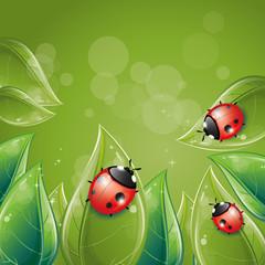 Green leaves design with ladybug
