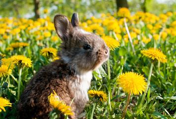 kleiner brauner Hase