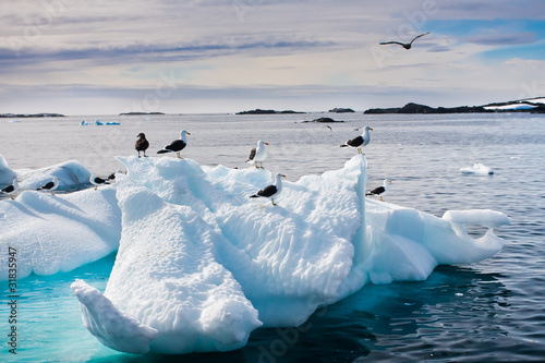 Fototapeten,schönheit,vögel,kalt,umwelt