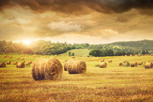 "Постер, картина, фотообои ""Field of freshly bales of hay with beautiful sunset"""