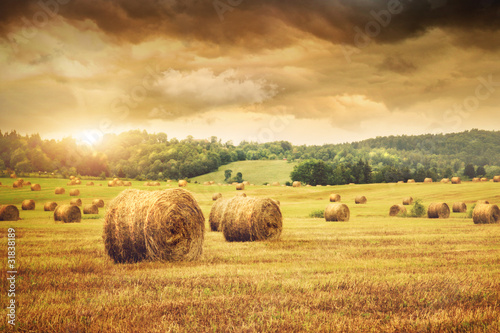 Naklejka dekoracyjna Field of freshly bales of hay with beautiful sunset