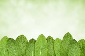 Fresh green mint isolated on green