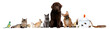 Group of pets sitting in front of white background