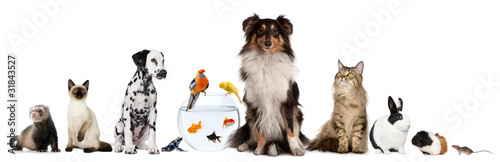 Foto op Canvas Kikker Group of pets sitting in front of white background