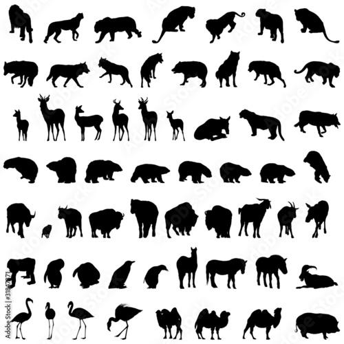 剪影动物哺乳动物外形大的孤立山羊插图收集构成熊登录自然虎设置设计