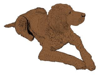 isolated bird dog - illustration