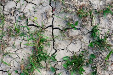 terreno con crepe per la siccità