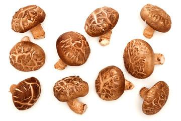 Shiitake Mushroom isolated on white