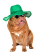 Smiling lady dog wearing green straw hat and sun glasses