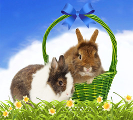 rabbits in basket on blue sky background