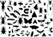 many different isolated insects