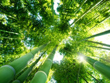 Fototapety bamboo forest