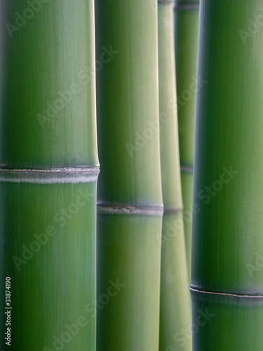 Tuinposter Bamboe bamboo reeds