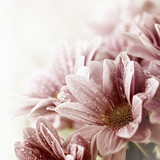 Fototapety Beautiful daisy flowers bouquet closeup
