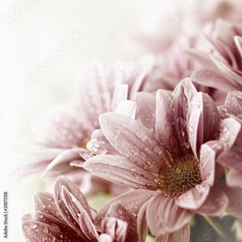 Beautiful daisy flowers bouquet closeup © B. and E. Dudziński