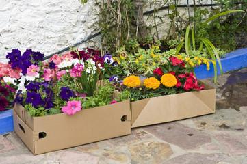Flores compradas en una caja de cartón