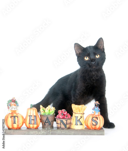 Cat with Thanksgiving sign